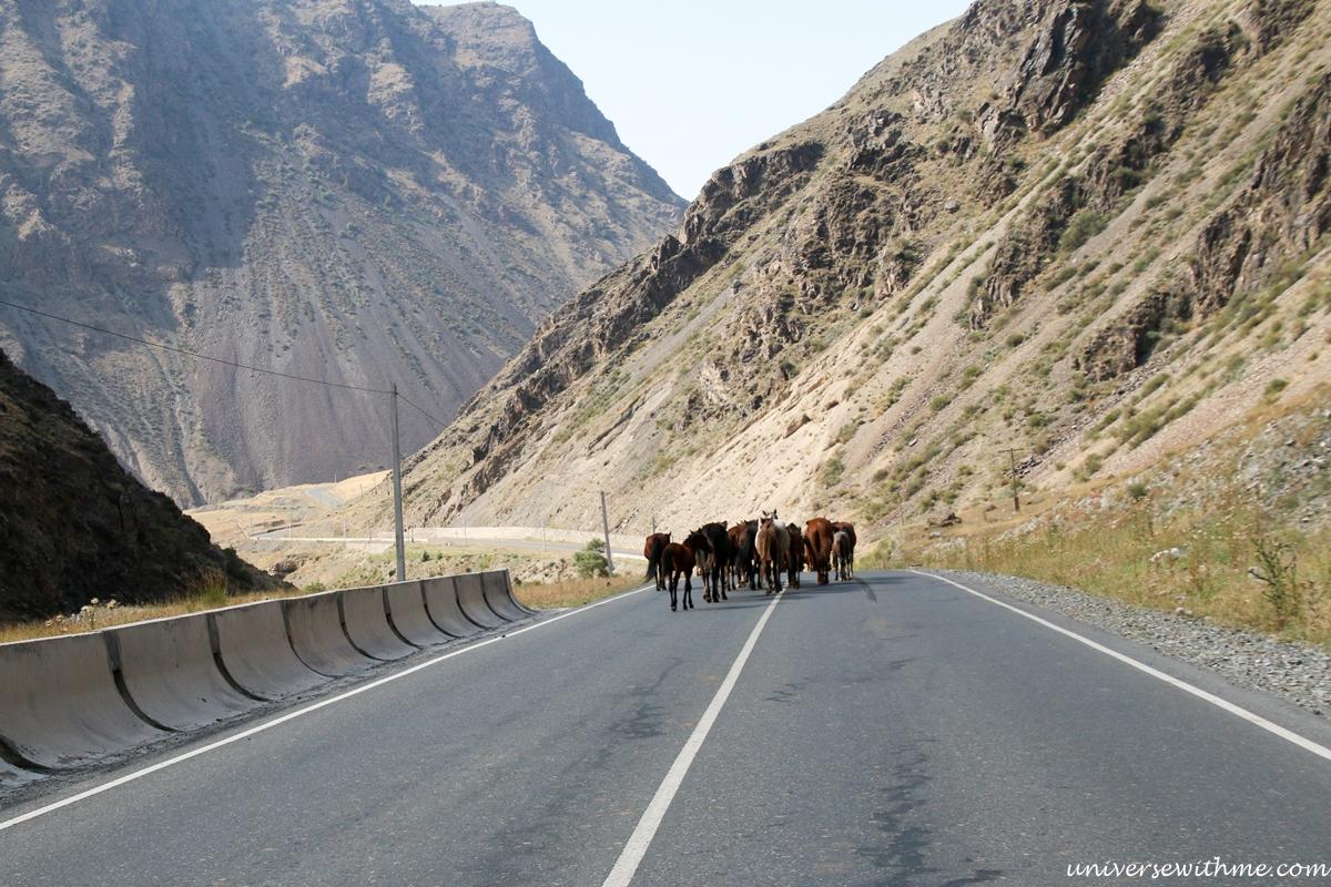 Kyrgyzstan Travel_023