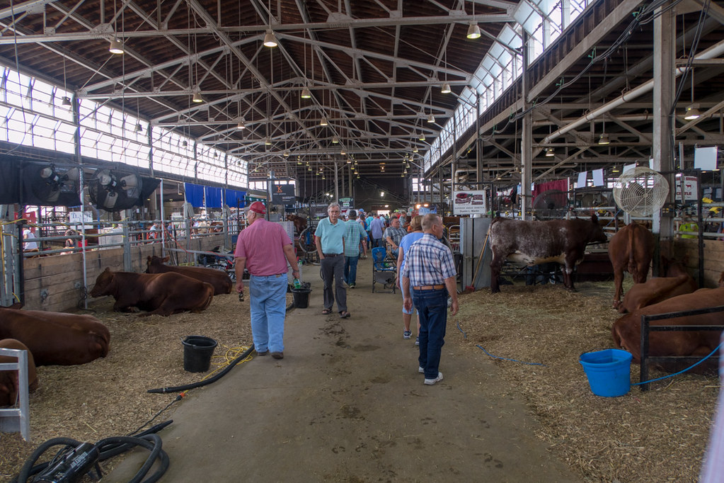 Cattle Barn at Iowa State Fair