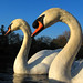 IMG_3809 - Mr & Mrs Swan - Southampton Common - 23.02.18