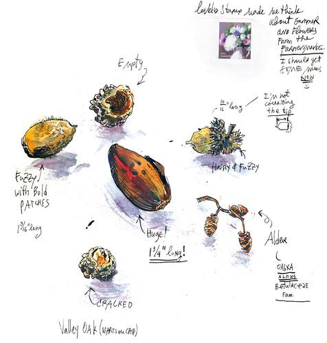 Sketchbook #111: Treasures - Acorn Collection