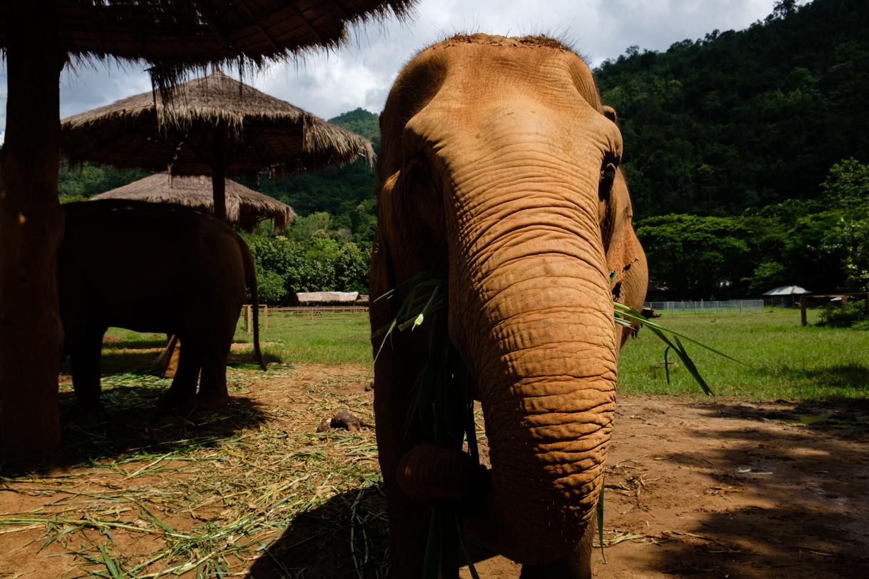 ChiangMai-Elephant-Sanctuary