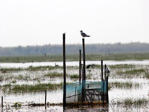 झील में मछली पकड़ने के लिये बनाई गई जाली