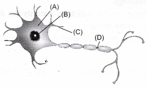 ncert-class-9-science-lab-manual-plant-and-animal-tissues-10