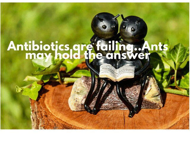 ants-antibiotic-solution