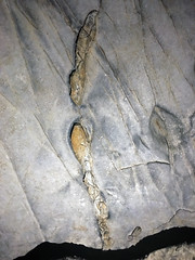 Chert nodules in limestone (Great Relief Hall, Mammoth Cave, Kentucky, USA) 2