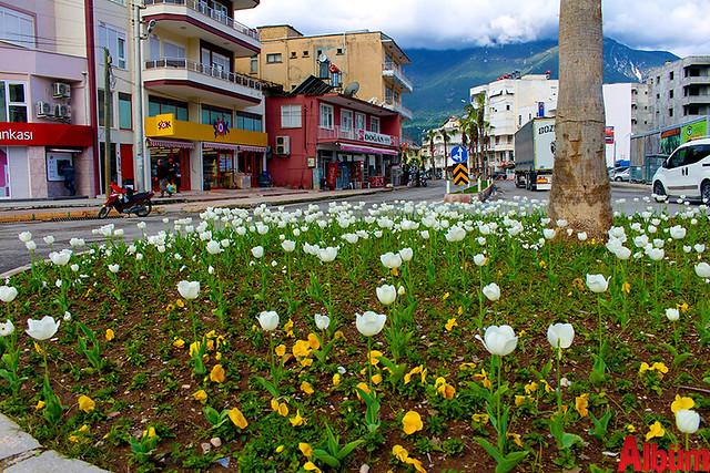 Finike'nin caddeleri çiçek açtı -2