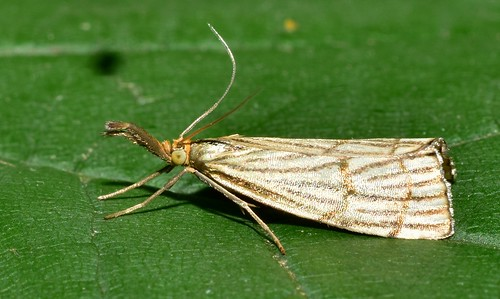 butterfly park europe summer micronikkor40mm nikond5300 пеперуда софиябългарияевропа юженпарк макро близъкплан closeup