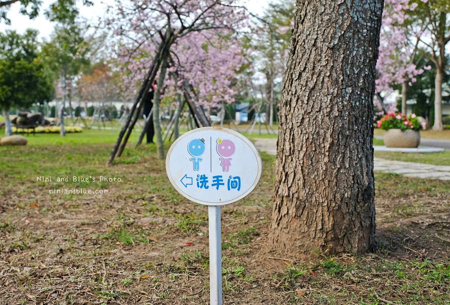 台中后里賞櫻花秘境14