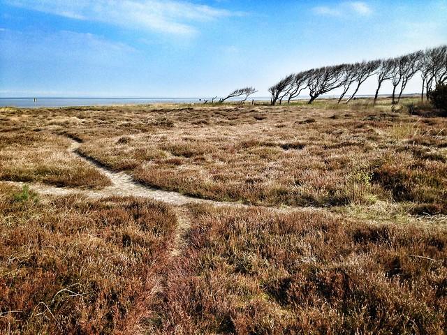 Windswept landscape, Apple iPhone 5, iPhone 5 back camera 4.12mm f/2.4