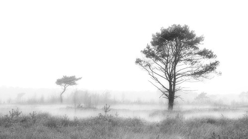 Low hanging mist makes a beautiful day! | by Jochem.Herremans