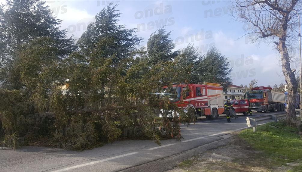 albero abbattuto padula