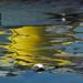 Paignton Harbour Reflection 03