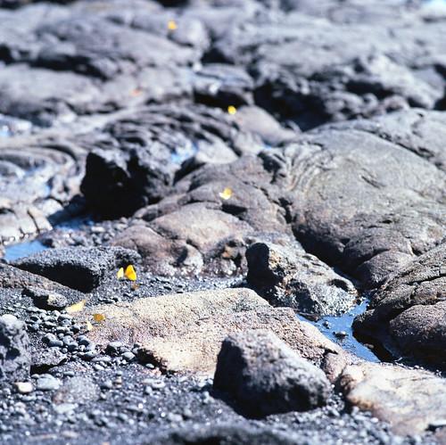 "Image titled ""Tiny Butterflies, Punalu'u Black Sand Beach."""