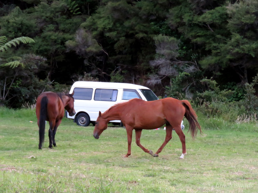 horses free campsite Northland