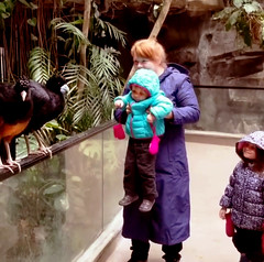 Meet the Birds — Bronx Zoo