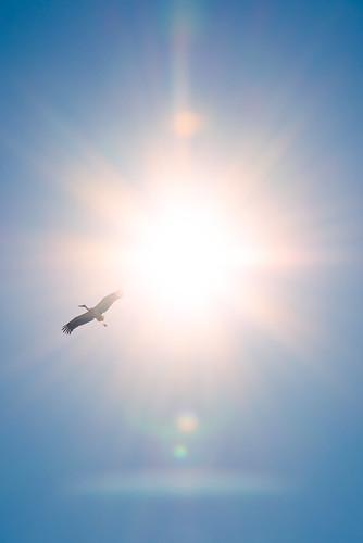 White Stork Against The Algarve Sun