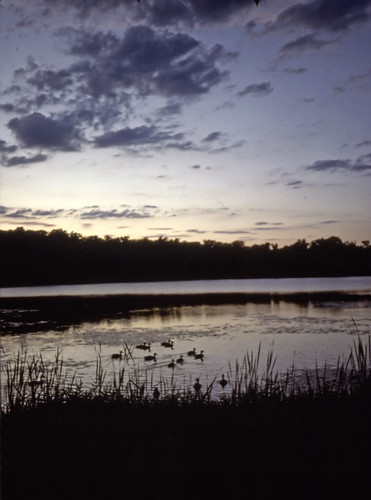Pond With Ducks - Kodachrome - 1987