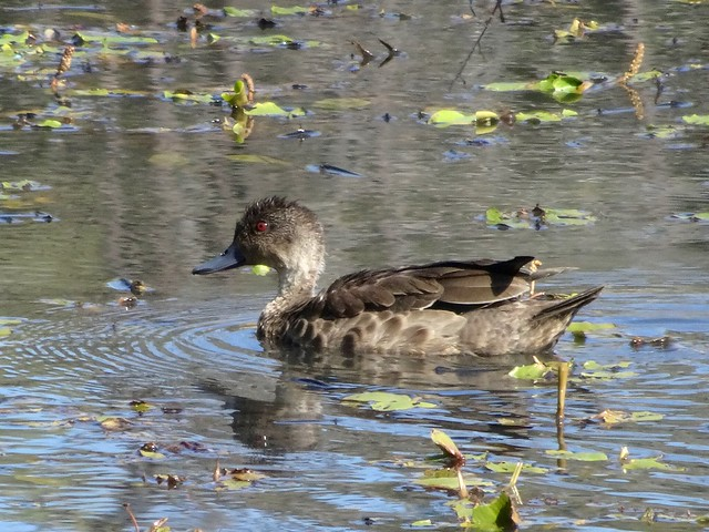 Grey Teal, Sony DSC-HX90V, Sony 24-720mm F3.5-6.4