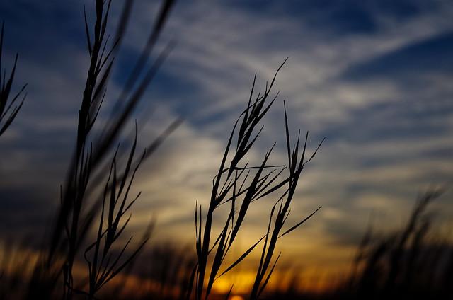 tall grass, sunset, Pentax K-50, smc PENTAX-DA 40mm F2.8 Limited