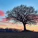 Tree by mechanicalArts