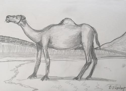 Mom's Camel #2