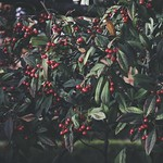 2018:01:14 16:31:45 - Rot & Grün - Fruit Nature Bokeh