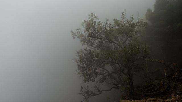Fade into the fog