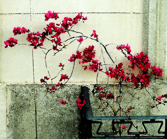wallflower 2, Fujifilm FinePix S5000