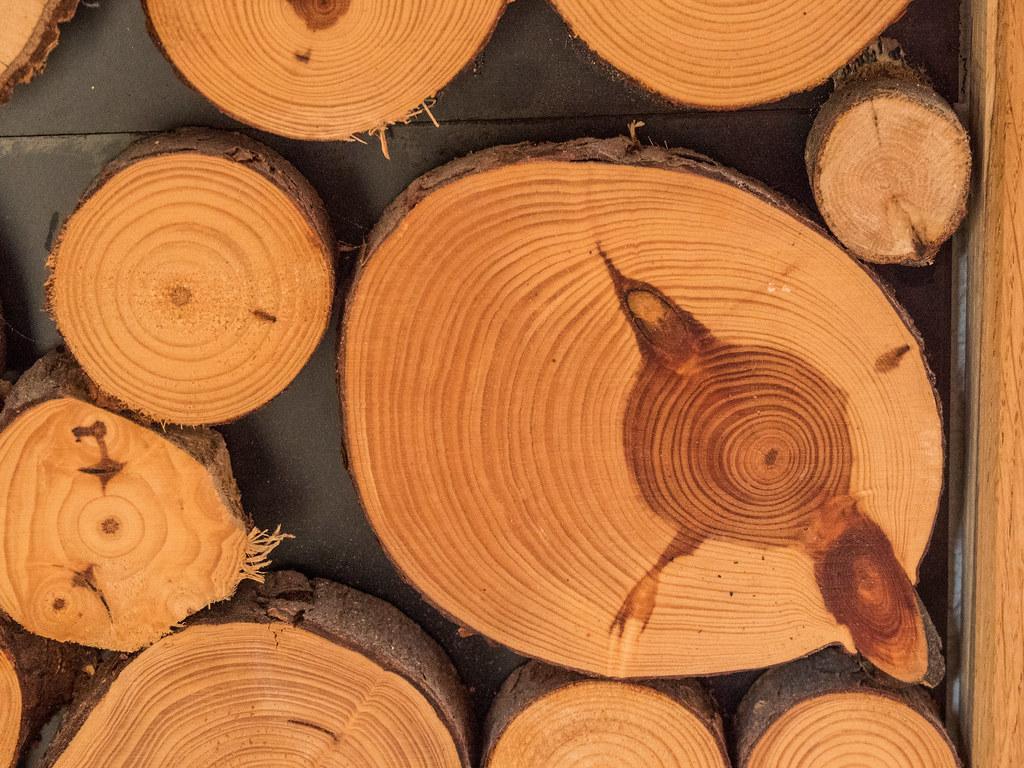 [FIL OUVERT] le bois sous toutes ses formes - Page 6 26767409048_1a423c764d_b