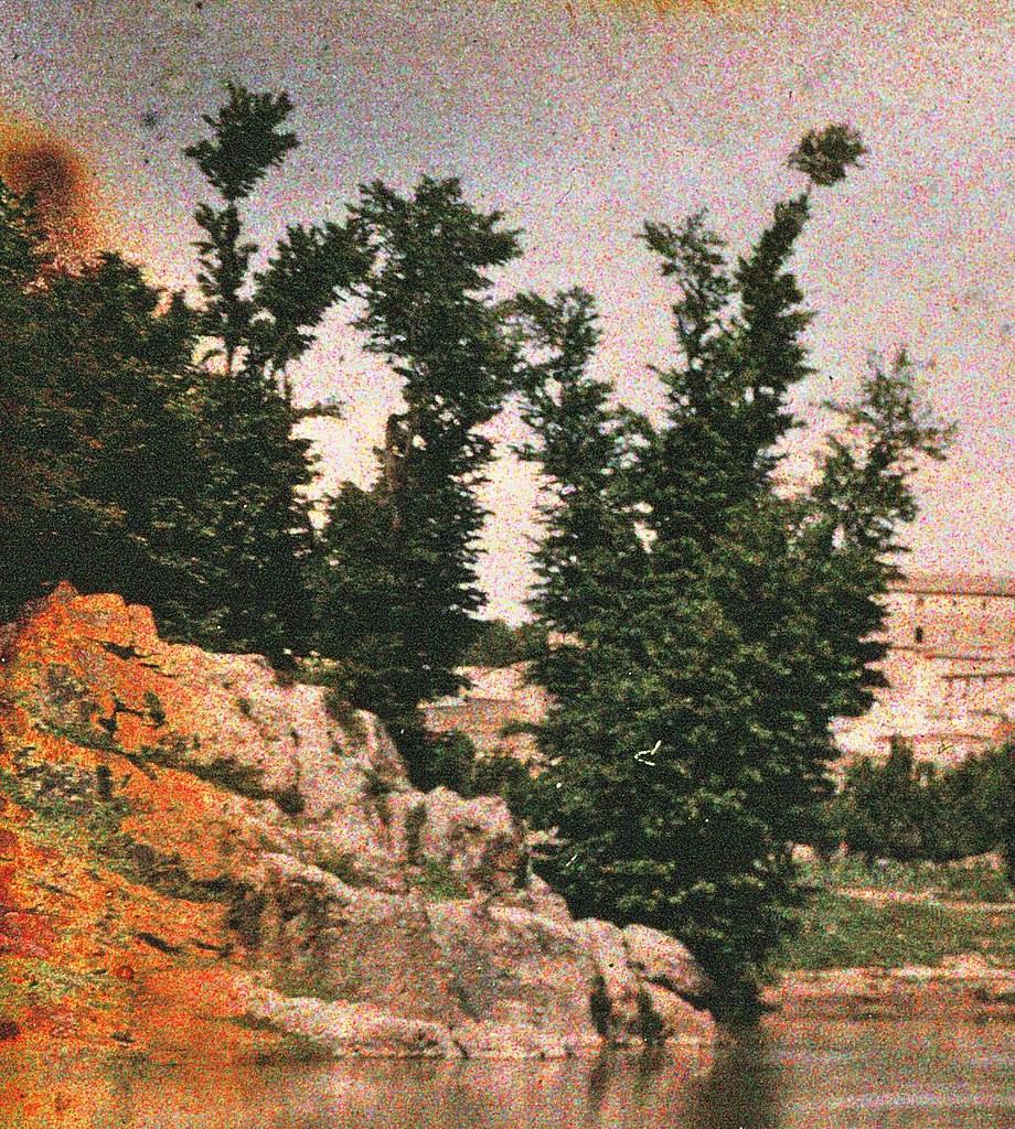 Olmeda de Ulmus minor (olmo ibérico autóctono) vista desde la playa de Safont en mayo de 1914. Autocromo de Manuel Amuriza López.