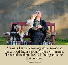 Quotes About Life :Animals have a knowing #lifeadvancer #quotes #animals | via Life Advancer