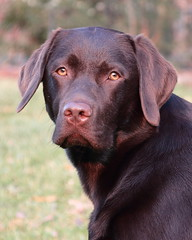 Milo, my faithful friend!