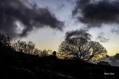 Nublo entre árboles