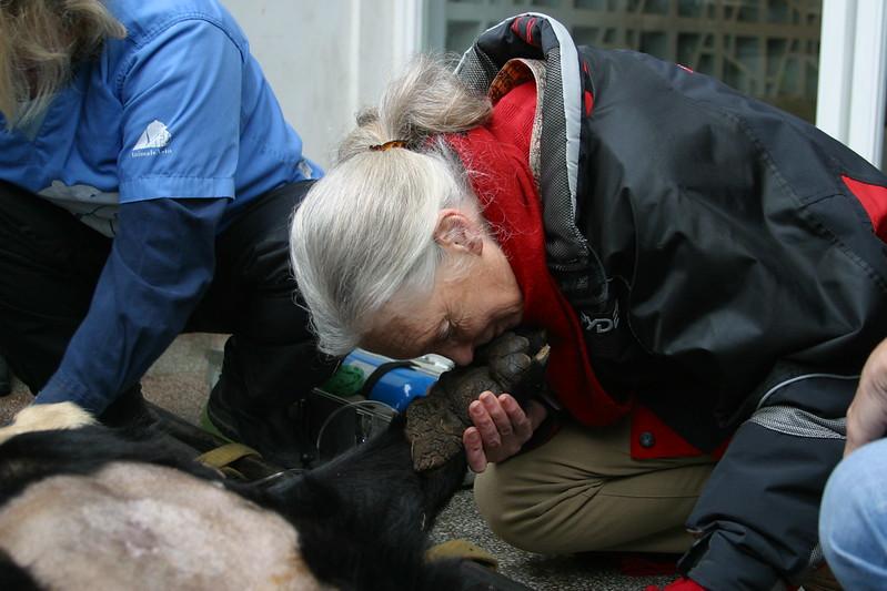 Jane Goodall met Mandela, China 2005