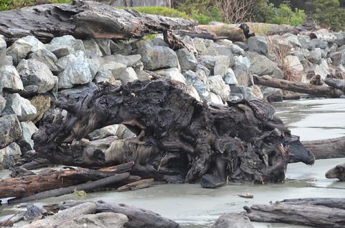 Tofino - gnarley driftwood