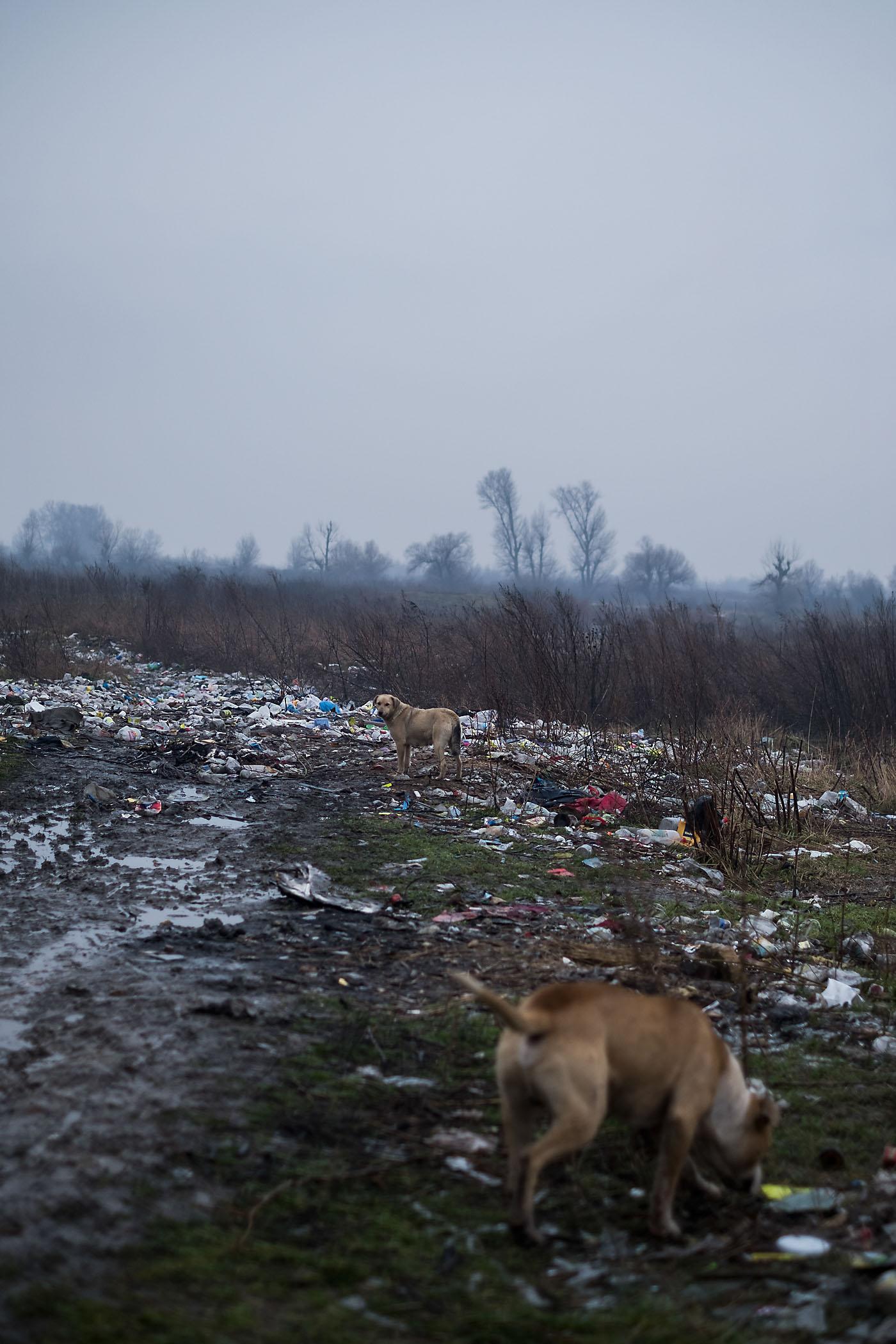 Kukák egy udvaron és a Sajó felé kihordott szemét Alsózsolcán | Fotók: Magócsi Márton