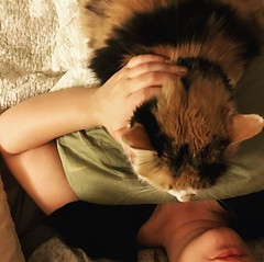 Zuzu clearly isn't getting enough love. #bedtime, #catsofinstagram