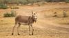 Screaming Donkey @ Mar Lodj, Senegal