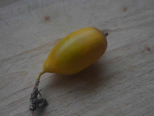Passiflora x 'Lavender Lady' 26335666478_9f532cf454