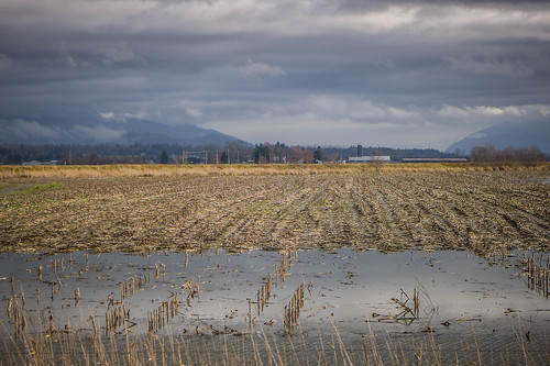 Skagit Valley Flooded Fields-002