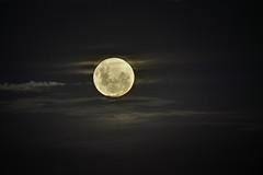 Blue Moon - Super Moon | 180131-3394-jikatu