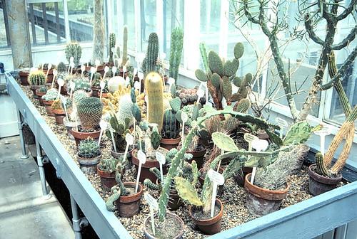 Cactus bench