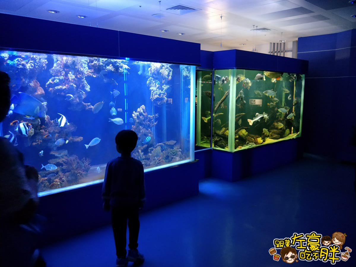 屏東生技園區國際級水族展示廳-28
