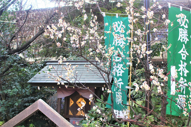 asagayashinmeigu-gosyuin02003