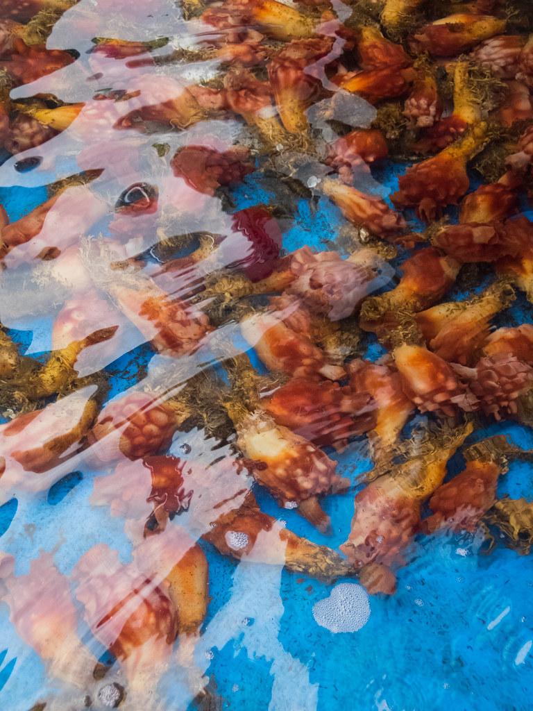 mysterious sea creatures | ken yee | Flickr