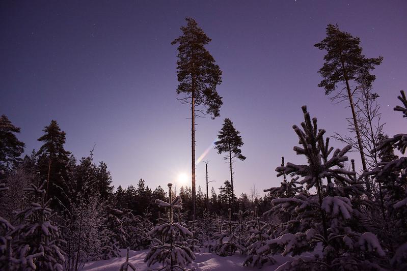suomen luonto talvellayö9