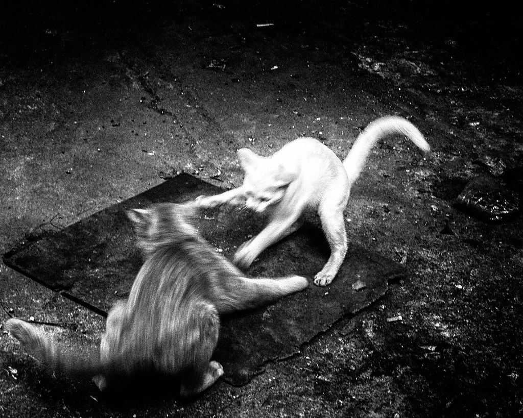 Cat Fight Bangkok