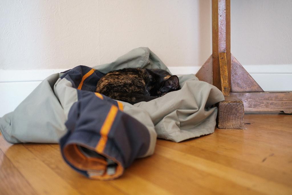 Our cat Trixie sleeps on a coat on the hardwood floor