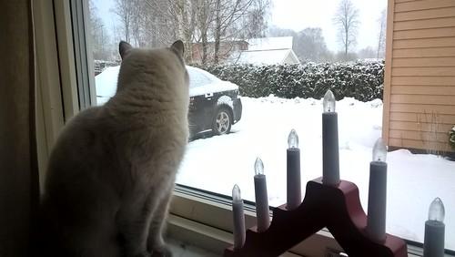 Milla en de sneeuw