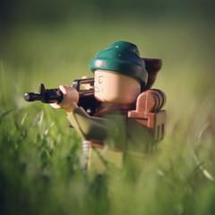 Gunshots through Grass.